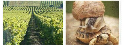 Fine Champagne, vigneron, vigne, beunaise